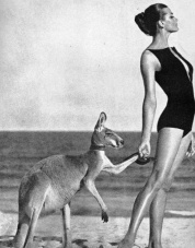 resort-kangaroo