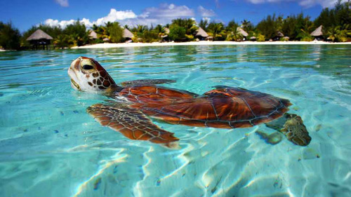 resort-turtle