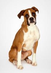mens-dog2